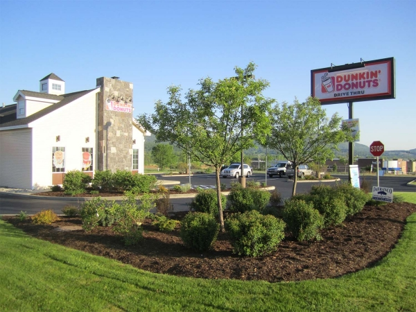 landscaped parking lot at Dunkin Donuts