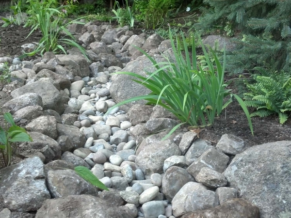 rock stream with native plants