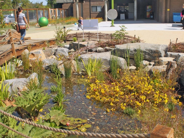 plantings and rock in small pond
