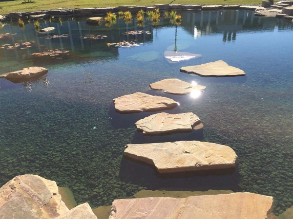 stepping stones in pond